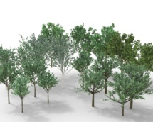 L'année 2013 sera-t-elle celle de l'écologie ?
