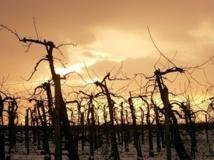 Le vin bio a le vent en poupe