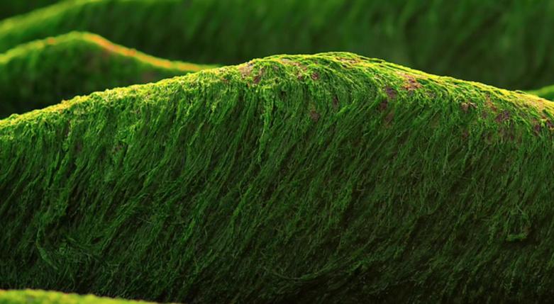 Biocarburants de la chimie verte : une étude française poursuit le travail sur la FAP