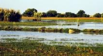 Paysage de Zambie - Crédit photo : Mehmet Karatay