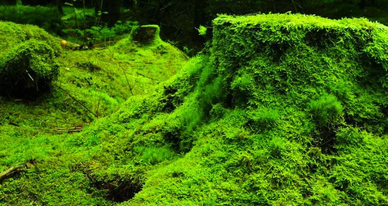 Neuf fondations déboursent 5 milliards de dollars pour l'environnement