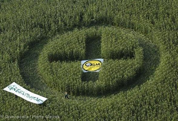 Quelles suites au rejet de l'interdiction par le Sénat pour les OGM ?