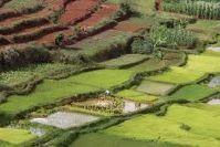 Fertilisation, les déchets organiques et verts pourraient être la solution