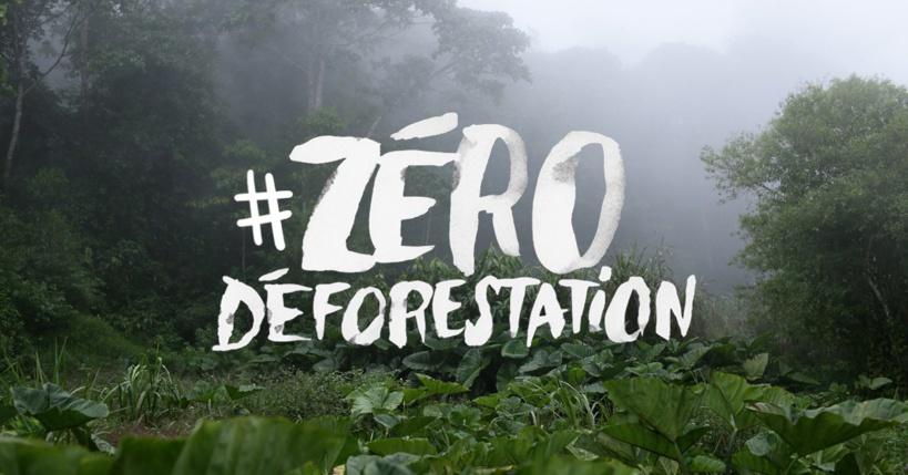 Déforestation, Greenpeace s'en prend au groupe Bolloré