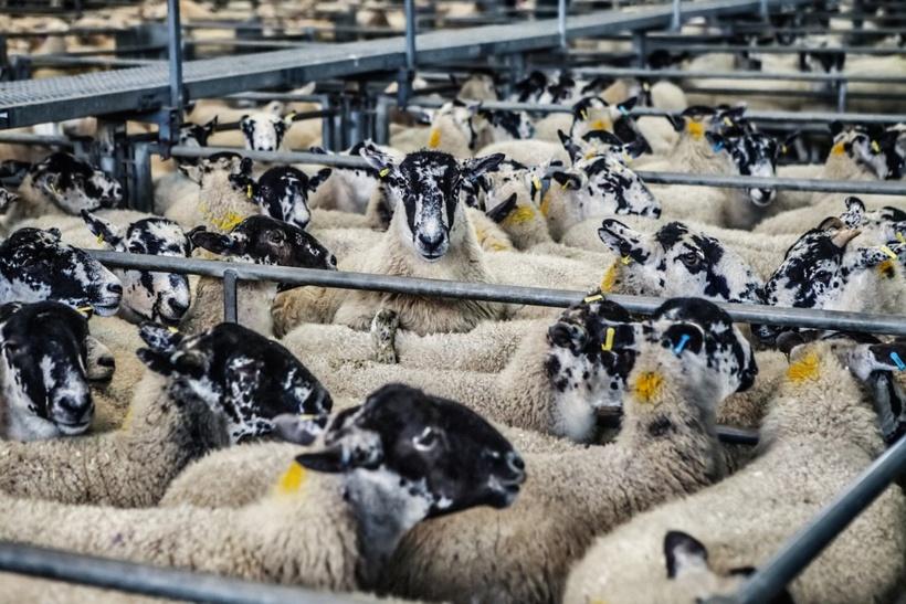Crise de l'élevage, les trois solutions de France Nature Environnement
