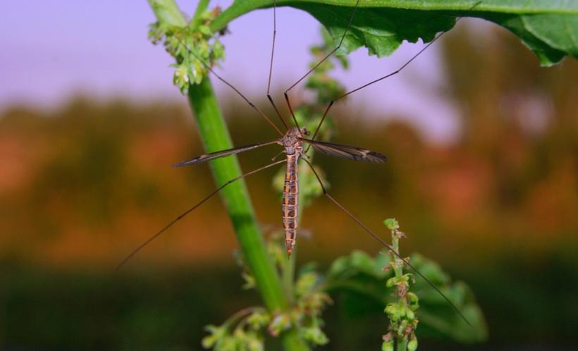 Pesticides, les risques ont été sous-estimés