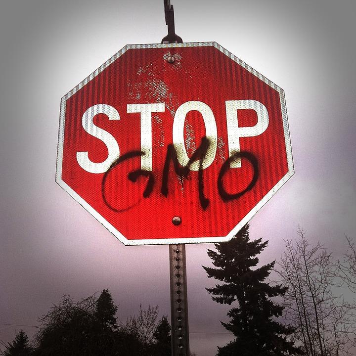 """OGM : """"Il y a 30 ans, la France fabriquait le premier OGM"""""""