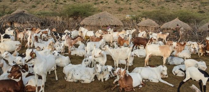 Le pastoralisme est notre avenir