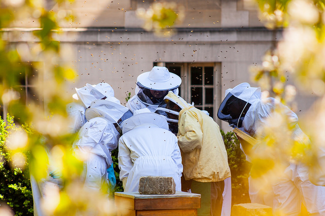 Pour que Paris soit candidate au label « bee-friendly »