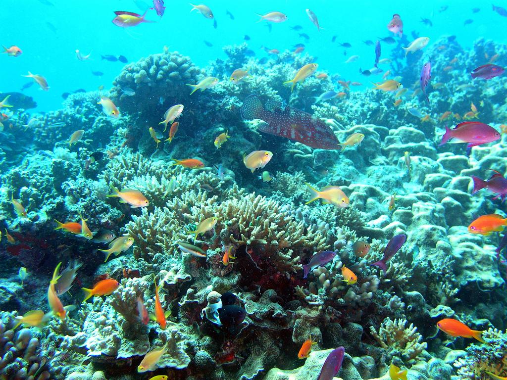 Grande barrière de corail, l'Unesco maintient la pression sur l'Australie
