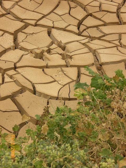 Californie : nouvelles restrictions d'eau face à la sécheresse