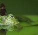 https://www.rse-magazine.com/Biodiversite-un-rapport-alarmant-sur-la-deterioration-en-France-depuis-2008_a4225.html