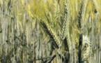 Un « tribunal citoyen » s'attaque à Monsanto