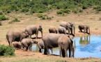 En moins de cinquante ans, la population animale a chuté de 58%
