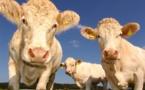 Santé, mieux nourrir les animaux pour mieux manger