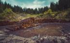 La déforestation favorise l'apparition des maladies infectieuses