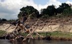 451 millions d'arbres en moins en Amazonie, la déforestation continue