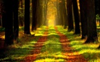 Le défi climatique nécessite la préservation des forêts