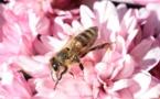 Greenpeace montre que les pesticides néonicotinoïdes sont plus nocifs qu'anticipés