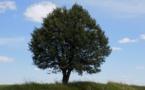 7 milliards d'euros levés avec les « obligations vertes »