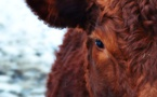 La cause animale pourrait influencer bon nombre d'électeurs