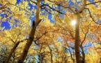 Environnement : 60.065 espèces d'arbres dans le monde dont près de 9600 menacés