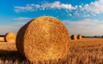 """Politique Agricole Commune : pour la WWF, la FNSEA est """"contre l'environnement"""""""