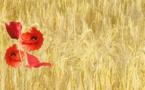 250 000 personnes demandent à la Commission européenne de revoir la politique agricole