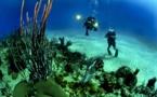 La Mer de Corail, un bijou à protéger d'urgence