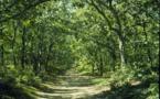 Lubéron : L'ONF appelle à valoriser la forêt de cèdres