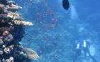 L'ONU alerte sur la dégradation des océans