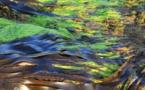 Algues vertes : le plan de lutte continue contre la prolifération