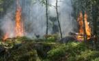 Incendies d'été : l'Office National des Forêts sur tous les fronts