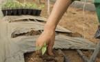 Qu'est-ce que l'agrovoltaïque, qui concilie production agricole et production d'électricité ?
