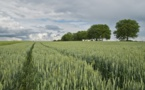 Analyser les filières agricoles sous le prisme du développement durable