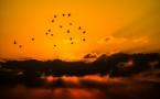 Eoliennes tueuses d'oiseaux, FNE attaque EDF Energies nouvelles