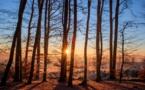 La filière forêt-bois au coeur de la lutte contre le réchauffement climatique