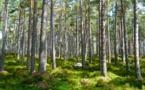 « Eco Tree », planter des arbres pour gagner de l'argent