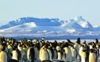 L'association des jeunes chercheurs polaires invite le grand public
