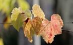 Un automne chaud et exceptionnellement sec