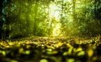 Développer la chimie du végétal en Ile-de-France, un pari ardu