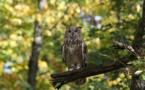 Les chasseurs veulent la fin des pesticides et herbicides toxiques
