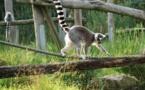 Une espèce de mammifère sur trois en situation préoccupante en France métropolitaine