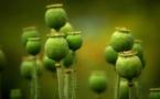 L'INRA rend un rapport sur les alternatives au glyphosate dans l'agriculture française