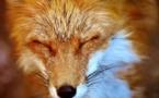 Ressources génétiques animales : un nouvel outil en ligne pour les protéger