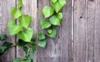 « Green Bonds », retour sur un levier de la transition très en vogue