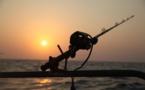 Vers une interdiction de la pêche électrique en Union européenne