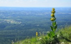Le Puy-de-Dôme facilite l'accès de ses sites naturels aux handicapés