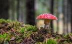 Les mécènes s'engagent pour les forêts publiques