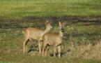 Un partenariat pour consolider la faune sauvage